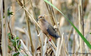 Hanging On Dove  055 by Sheriannphotography