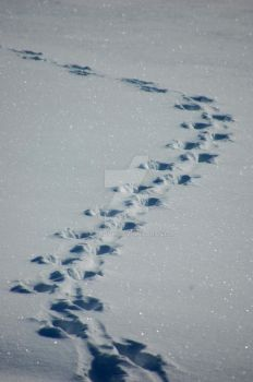 Footprints in the snow by Annaovk