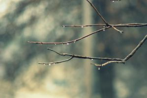 Raindrops of life by MicWits101