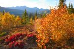Fall Color, Denali by iamintheprocess