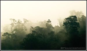 Cloud forest?? by franckgphoto