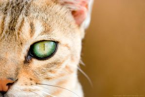 Look At You by Sato-photography