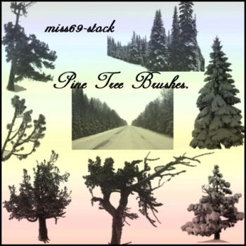 Pine tree Brushes by miss69-stock
