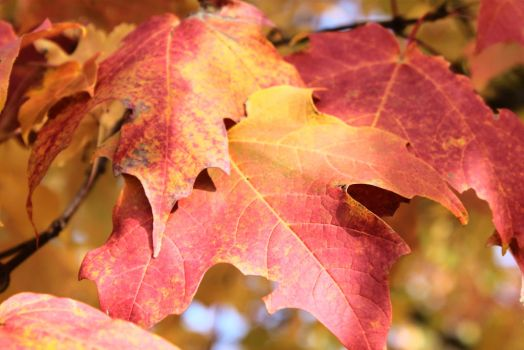 Fall Leaves 3 by TimeElf