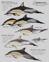 Common dolphins of Australia and New Zealand by namu-the-orca