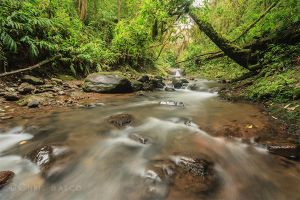 Stream Revisited by CBasco