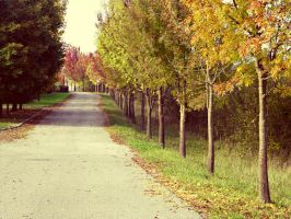 Autumn is here. by Umfridus