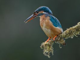 Drooling by Jamie-MacArthur