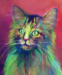 Colorful Cat 5 by San-T
