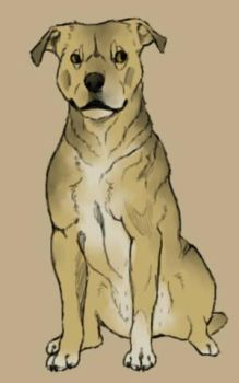 Dog Study #8- Prissy by TheWolfLover2003