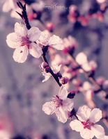 Blossom flowers by VanillaBoom