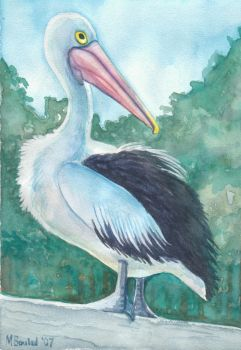 Pelican by MBoulad