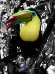 Toucan by BloodyParasite