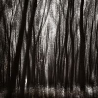 Into the woods by kpavlis