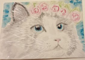 Kitty cat  blue  eyes  roses watercolor aceo by tulipteardrops