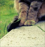 Cat paws by Lilith1995