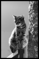 A cat by Yeloon