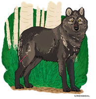 Wolves from the white woods by Urengeal