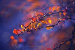 Magic Autumn by Justine1985