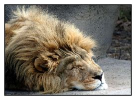 Sleeping King by CTP