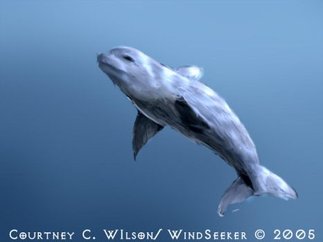 The First Dolphin by WindSeeker