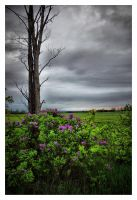 Land of the Lilac by jasonwilde