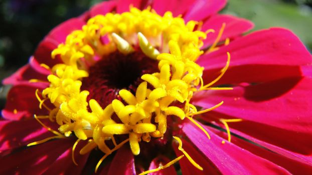 Close up of flower by CRV2857826