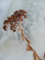 Ice Dripping by MissCelinePhotograph