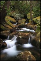 Trees Water and Rocks by TRBPhotographyLLC