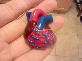 Anatomical heart in clay by ChiJadey