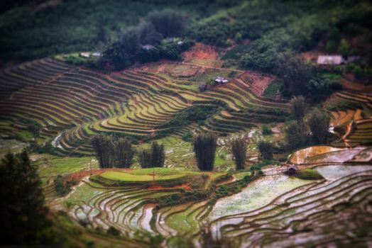 Sapa Terraces by smoothpappa
