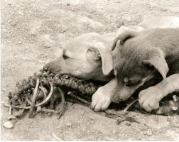 dogs by abyssful