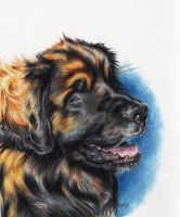 leonberger by EatToast