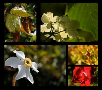 Nature Series by eannez