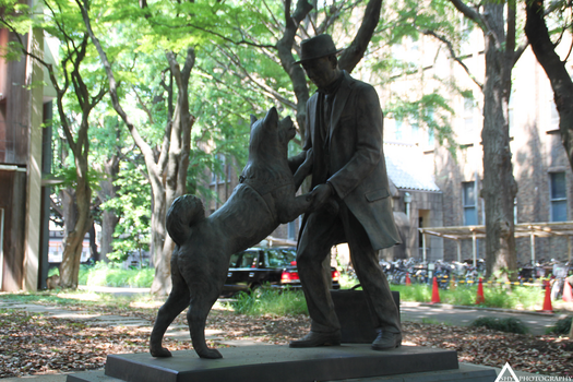 Hachiko Memorial Statue by ShynessPhotography