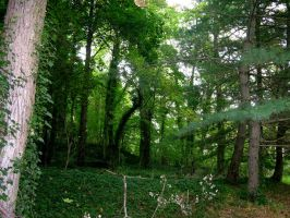 Enchanted Forest Stock 1 by FairieGoodMother