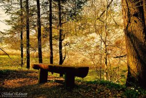 Lonely Bench by e2micha