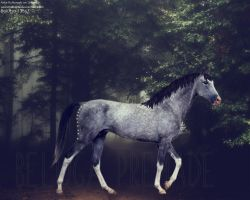 Akhal Teke New Premade for HP by prixmanipulation