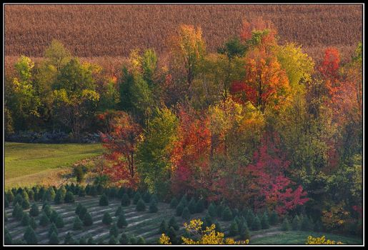 October Colors by IgorLaptev