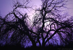 Winter and bare by TlCphotography730