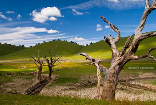 Dead Trees In A Valley by LePhotagDeAbnormal