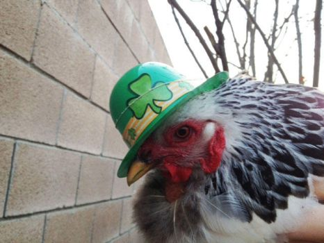 Millie's decked out for St. Patty's by Mary-Creations