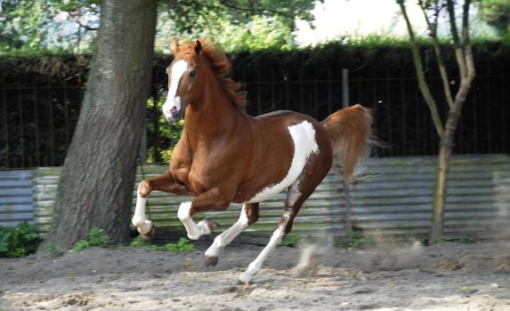 cantering horse - Boy by Horses1999-Stock