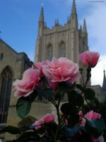 Cathedral Rose by In-the-picture