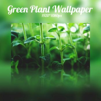 Green Plant Wallpaper by NKspace