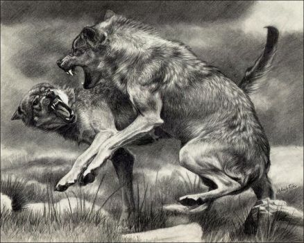Wolf Fight by nikkiburr