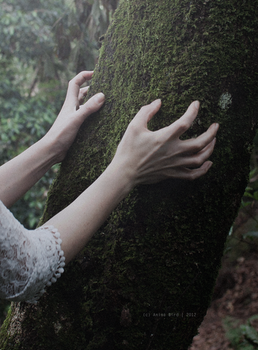 The trees used to speak by Anina-Bird