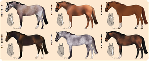 Remont horses for AEC Class of 2016 by Ackerley