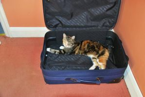Kitty In A Suitcase...... by phraxdust