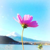 Flower with Mt fuji by yumi71